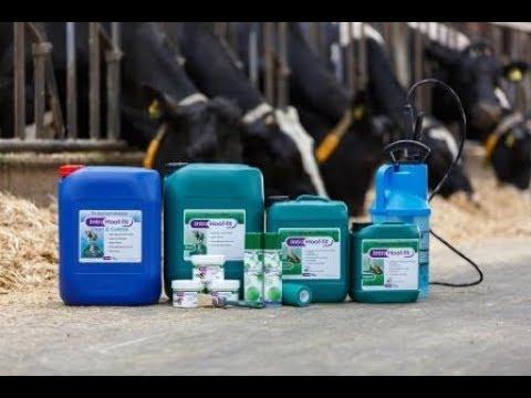 Eko_Hoofcare_Good_Footbathing_Practices_For_Cattle